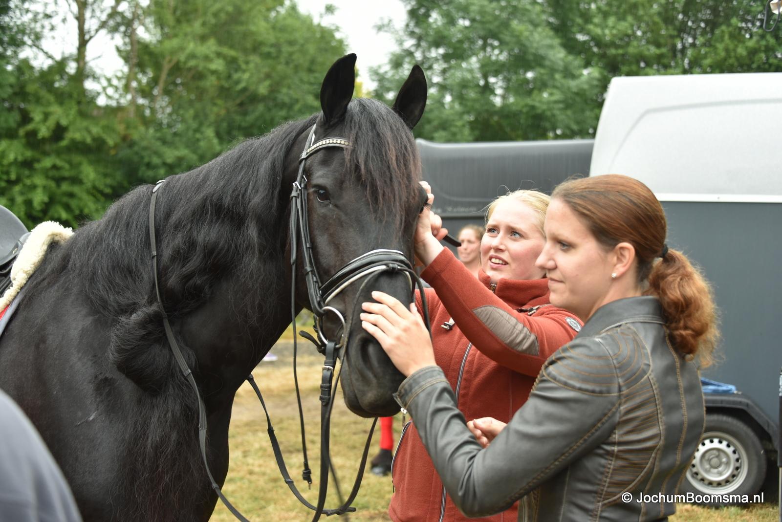 Paardenshow oudwoude